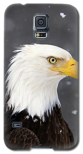 Bald Eagle Intensity Galaxy S5 Case