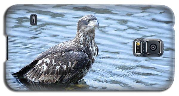 Bald Eagle Juvenile Galaxy S5 Case