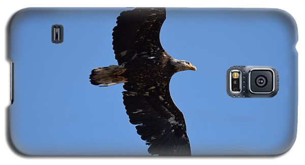 Bald Eagle Juvenile Soaring Galaxy S5 Case