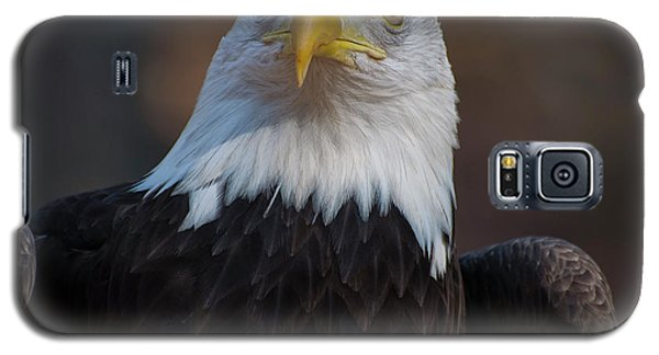 Bald Eagle Looking Right Galaxy S5 Case