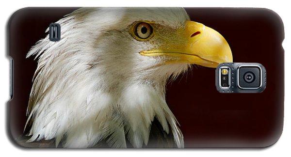 Bald Eagle - Majestic Portrait Galaxy S5 Case