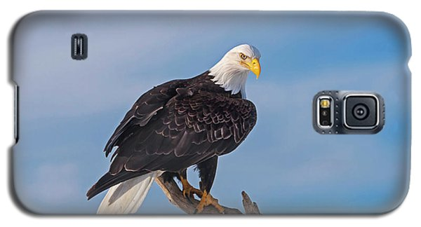 Bald Eagle Majesty Galaxy S5 Case