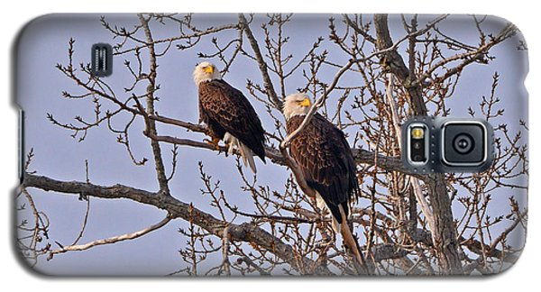 Bald Eagle Pair Galaxy S5 Case