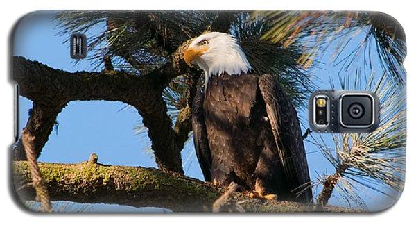 Bald Eagle Perch Galaxy S5 Case