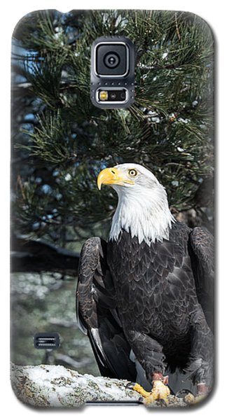 Bald Eagle Ready For Flight Galaxy S5 Case
