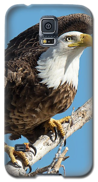 Bald Eagle Ready To Launch Galaxy S5 Case