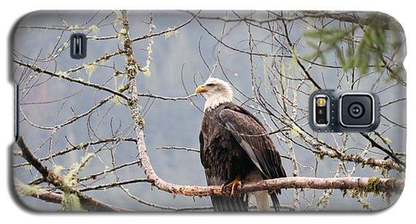 Bald Eagle Resting Galaxy S5 Case