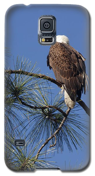Galaxy S5 Case featuring the photograph Bald Eagle by Sally Weigand