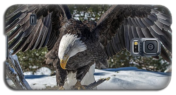 Bald Eagle Spread Galaxy S5 Case