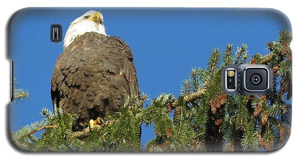Bald Eagle Sunbathing Galaxy S5 Case