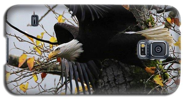Bald Eagle Takes Flight Galaxy S5 Case