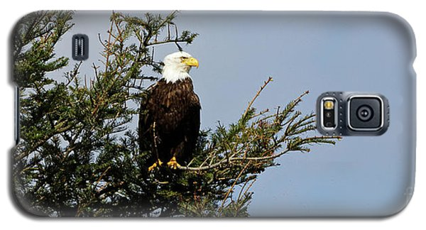 Bald Eagle - Taking A Break Galaxy S5 Case