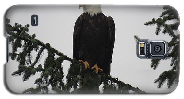 Bald Eagle Watching Galaxy S5 Case