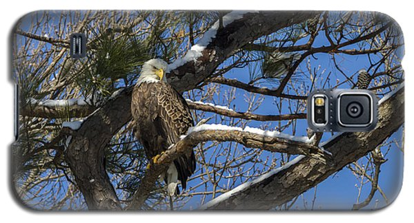 Bald Eagle Watching Her Domain Galaxy S5 Case