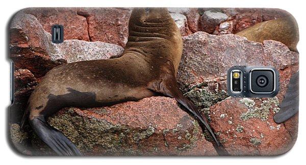 Galaxy S5 Case featuring the photograph Ballestas Island Fur Seals by Aidan Moran