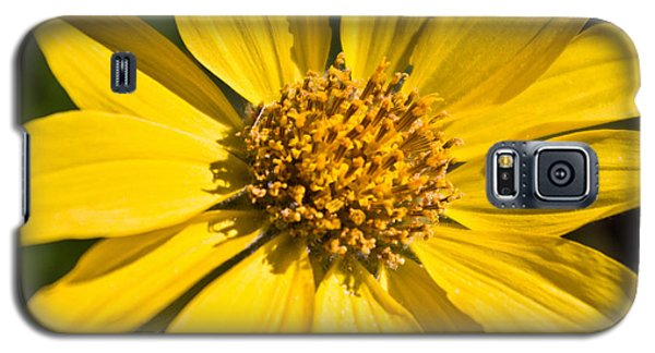 Balsamroot 2 Galaxy S5 Case