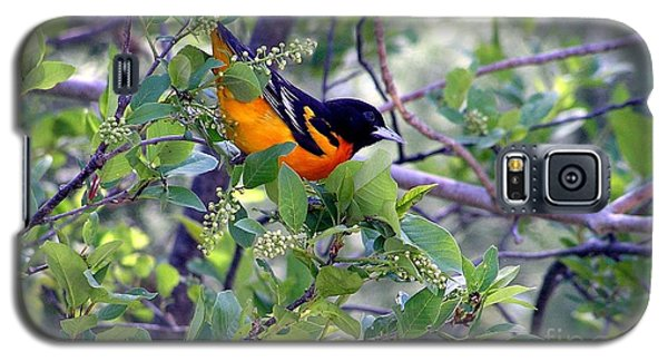 Baltimore Northern Oriole Galaxy S5 Case