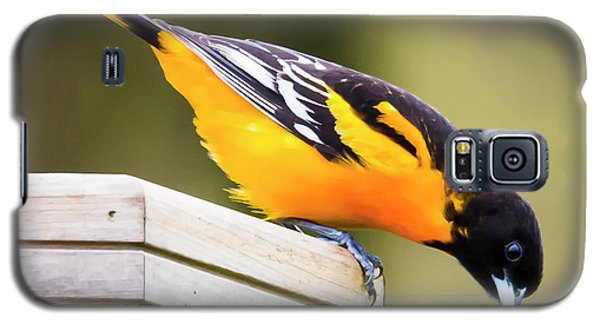 Galaxy S5 Case featuring the photograph Baltimore Oriole About To Jump by Ricky L Jones