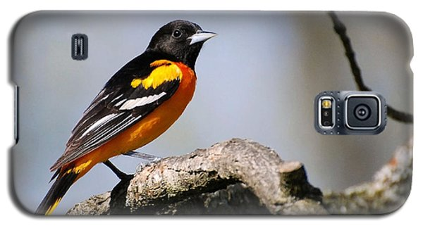 Baltimore Oriole Galaxy S5 Case by Christina Rollo
