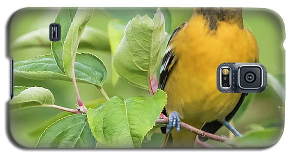 Galaxy S5 Case featuring the photograph Baltimore Oriole Closeup by Ricky L Jones