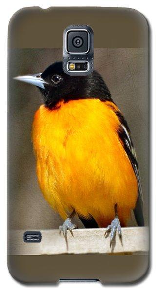 Baltimore Oriole Galaxy S5 Case