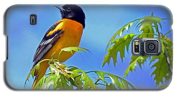 Baltimore Oriole In An Oak Tree Galaxy S5 Case by Rodney Campbell