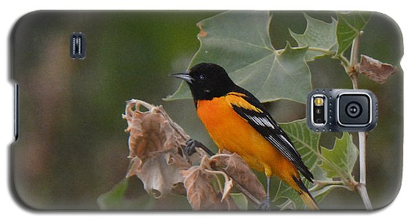 Baltimore Oriole In Sycamore Tree Galaxy S5 Case