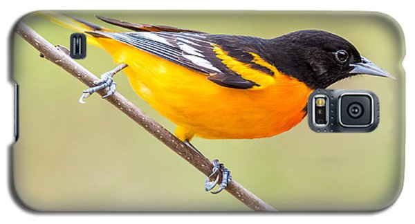 Baltimore Oriole Galaxy S5 Case by Paul Freidlund