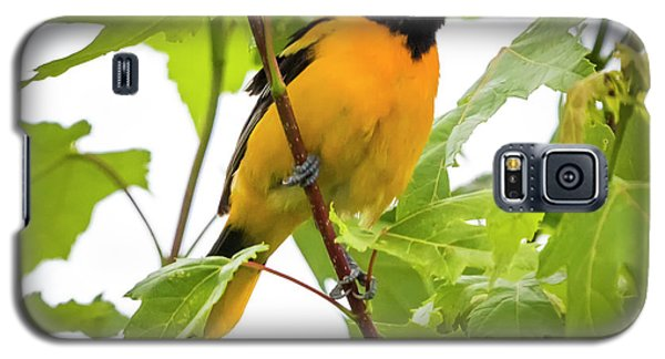 Galaxy S5 Case featuring the photograph Baltimore Oriole With Raspberry  by Ricky L Jones