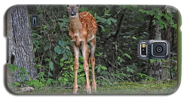 Galaxy S5 Case featuring the photograph Bambi by Brenda Bostic