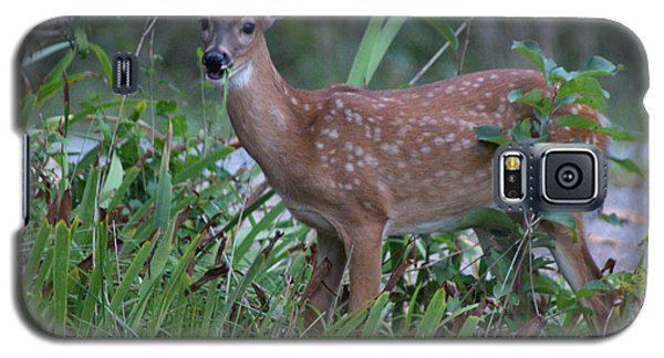 Galaxy S5 Case featuring the photograph Bambi by Rick Friedle