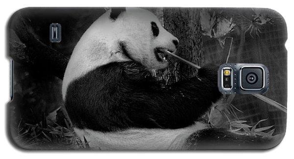Bamboo, Bamboo, Bamboo Galaxy S5 Case