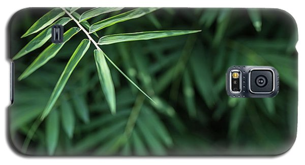 Bamboo Leaves Background Galaxy S5 Case