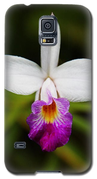 Bamboo Orchid  Galaxy S5 Case by Kerri Ligatich