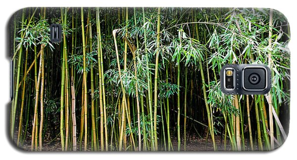 Bamboo Wind Chimes  Waimoku Falls Trail  Hana  Maui Hawaii Galaxy S5 Case by Michael Bessler