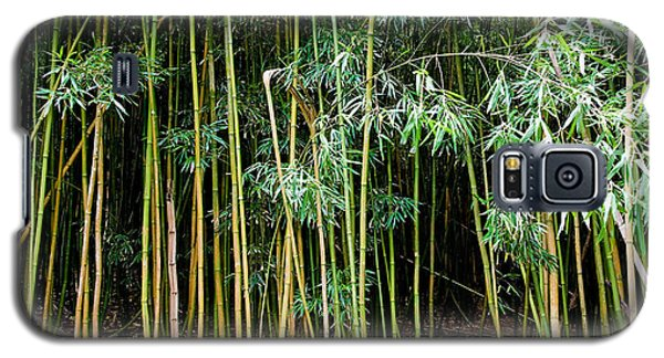 Bamboo Wind Chimes  Waimoku Falls Trail  Hana  Maui Hawaii Galaxy S5 Case