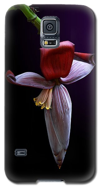 Banana Flower Portrait Galaxy S5 Case