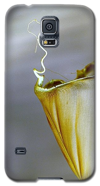 Banana Leaf Galaxy S5 Case