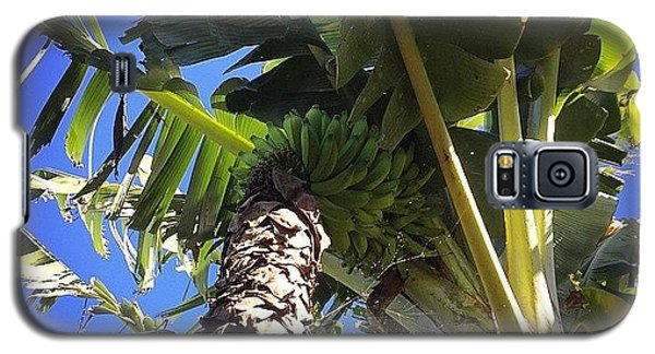 #banana #maui #hawaii #ono #fresh Galaxy S5 Case by Sharon Mau