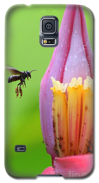 Banana Pollinator   Galaxy S5 Case by Irina Hays