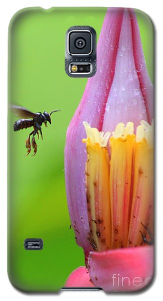 Galaxy S5 Case featuring the photograph Banana Pollinator   by Irina Hays