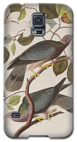 Band-tailed Pigeon  Galaxy S5 Case by John James Audubon