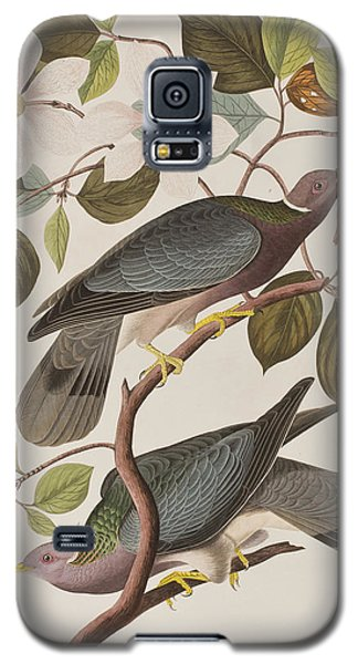 Band-tailed Pigeon  Galaxy S5 Case by John James Audubon