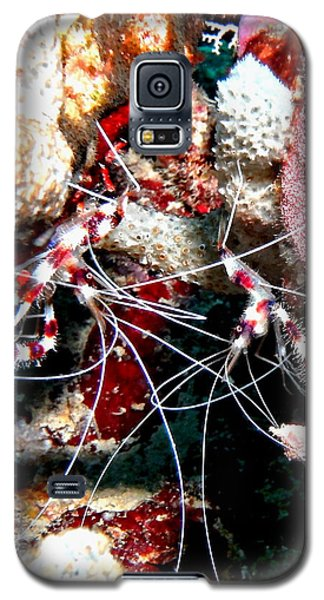 Galaxy S5 Case featuring the photograph Banded Coral Shrimp - Caught In The Act by Amy McDaniel