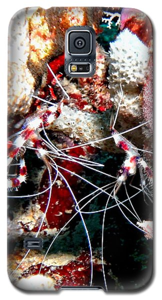 Banded Coral Shrimp - Caught In The Act Galaxy S5 Case