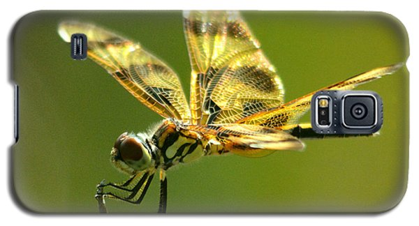 Banded Pennant, Female Galaxy S5 Case