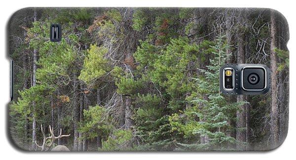 Banff Canada Elk Woodland Landscape Galaxy S5 Case by Andrea Hazel Ihlefeld