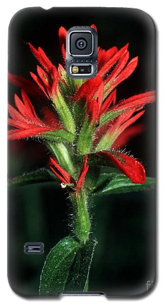 Banff - Indian Paintbrush 4 Galaxy S5 Case