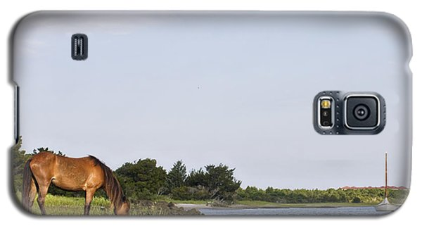 Galaxy S5 Case featuring the photograph Banker Horse Along Taylors Creek by Bob Decker