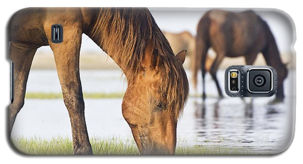 Galaxy S5 Case featuring the photograph Banker Horses On Tidal Flat by Bob Decker
